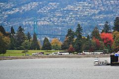 Walk in Coal Harbour enjoying Autumn Color, wildlife, Downtown, Vancouver, British Columbia Stock Image