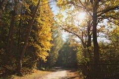 A walk among colors stock image