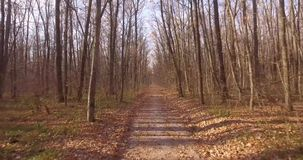 A walk in the deciduous autumn forest. Copter slowly flies over the path between the bare trees