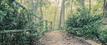 The walk into the deep forest with tall trees on either side.  Royalty Free Stock Photo