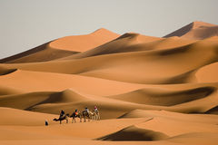 Walk in the desert. Camel trekking on Africa´s desert, Merzouga dunes, Morocco