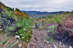Walk in Desert des Agriates in Northern Corsica. Walk pass in Desert des Agriates in Northern Corsica, the spring flowers are around, the rocky landscape is at Stock Images