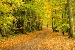 Walk di signora Maria, Crieff, Scozia, Regno Unito Fotografia Stock