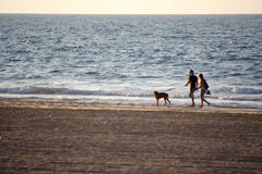 Walk with dog. A walk along the sea with dog Stock Image