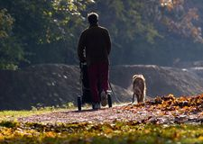Walk Dog. A man was walking his dog with his baby stock photos