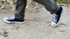 Walk with a dog. Close up on the feet of a woman walking with her dog on a leash on a path in a park. Filmed during the month of October, during the autumn stock footage