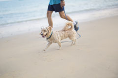 Walk with a dog Stock Image