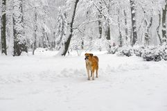 Walk with a dog stock photos