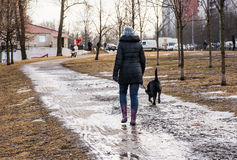 A walk with the dog. In the Park Royalty Free Stock Photos