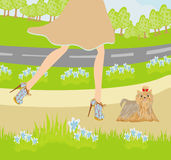 Walk the dog in the park Stock Photo