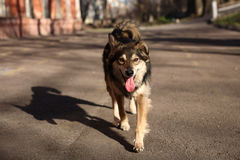 Walk with a dog on a warm spring day Stock Photos