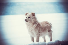 Walk with dog. In Winter day Stock Photography