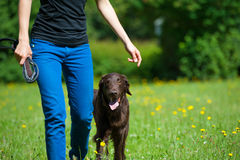 Walk with dog. Woman walk with her dog Royalty Free Stock Photography