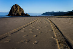 Walk or Drive. Tire tracks and foot prints at Cannon Beach Royalty Free Stock Photo
