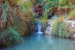 Walk in the Ein Gedi Nature Reserve stock images