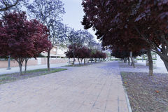 Walk in Elche with flowering trees. royalty free stock photography