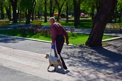Walk an elderly man with a dog in the summer Park. Russia. 2018. An old man walks with a dog on the road in a Park planted with flowers stock photo