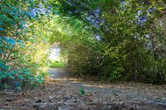 Walk entrance With Green Trees royalty free stock image