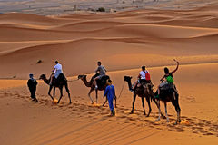 Walk in the ERG desert in Morocco. Erg Morocco Some tourists riding dromedaries for a walk in dawn Desert Erg Chebbi in Arabic: عرق الشبي is one of two Royalty Free Stock Image