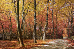 A Walk in the Fall Royalty Free Stock Photography