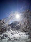 Walk through the fir forest stock photo