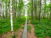 Walk through the forest. A pathway through the Store Mosse  Natural Reserve in Gnosjö, Sweden Royalty Free Stock Photo