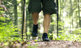 Walk through the forest Stock Images