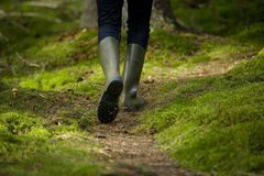 Walk in the Forest Stock Photography