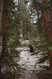A walk in the forest. Evergreen forest in Colorado in early Spring stock images