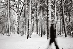 A walk in the forest Royalty Free Stock Image