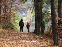 Walk in the forest. Family walk in the forest Royalty Free Stock Photography