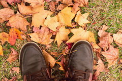 Walk through Forest Autumn leaves Royalty Free Stock Photo