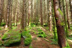 Walk through the forest in Lofthus, Norway stock photo