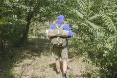 Walk through the forest.Man going on the solo trip royalty free stock photography
