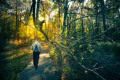 Walk in Forest Royalty Free Stock Images
