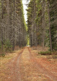 Walk in the forest. A path-way in the forest in spring Royalty Free Stock Photo