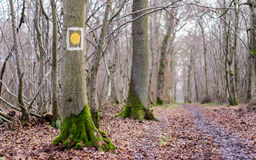 Walk in the forest Royalty Free Stock Photography