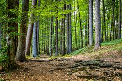 A Walk in the Forest Royalty Free Stock Images