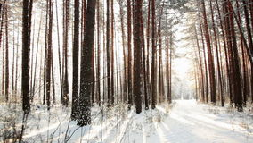 The Walk Through the Forest to Meet the Sun