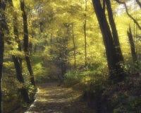 Walk in Frick park in autumn Stock Photo