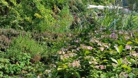Walk in the gardens Stock Image