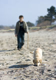 Walk with golden retriever. A boy walking on the beach with his golden retriever puppy stock images