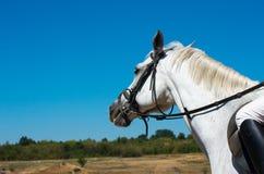 Walk with horse. Horseback riding. Royalty Free Stock Image