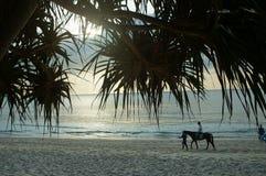 Walk on horseback along the sea  the beach Thailand Stock Image