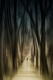Walk in the l mystical forest Royalty Free Stock Photos
