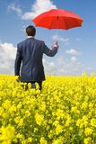 Walk in meadow. Rear view of businessman with red umbrella going through flower field Stock Photography