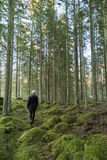Walk in a mossy forest Stock Photography