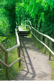 Walk over the bridge in the woods Royalty Free Stock Photo