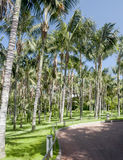 Walk with palm trees Royalty Free Stock Photography