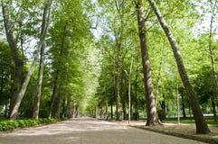 Walk through the park Stock Photography